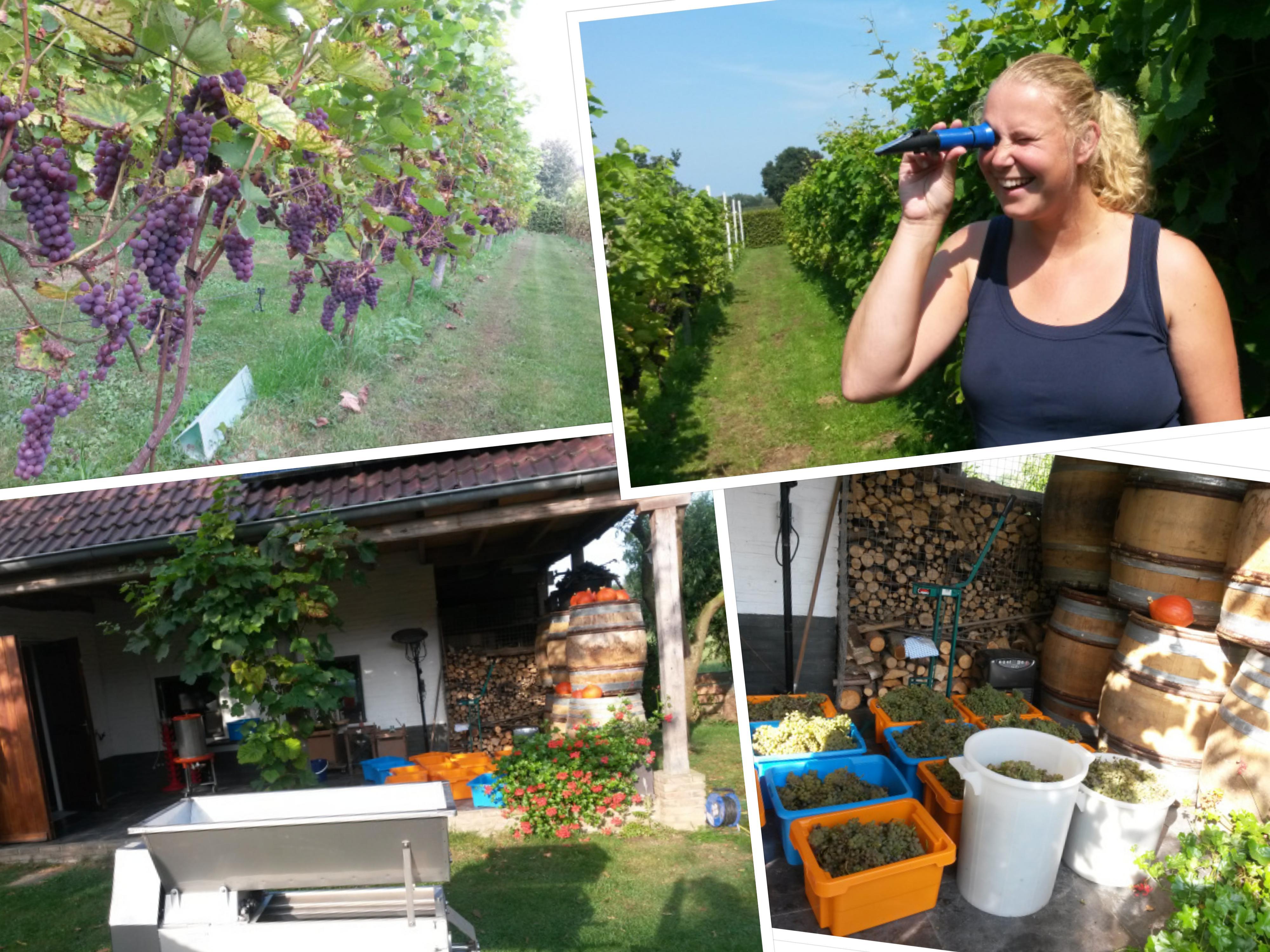 collage-cursus-wijnbouw-nederland