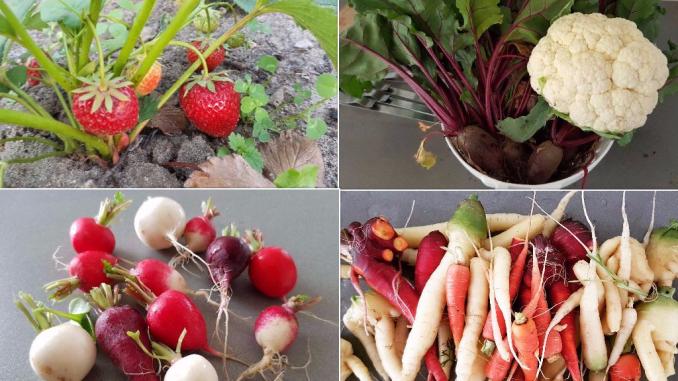 collage oogst groenten moestuin